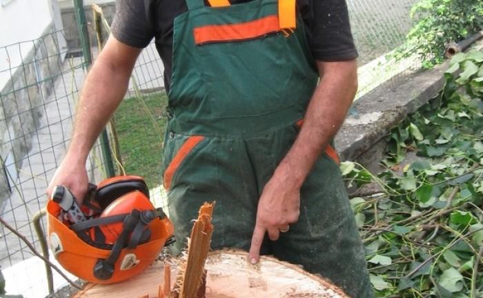 Abbattimento alberi malati Comune FIV_2