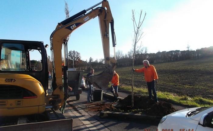 Nuovi alberi Lavori aree verdi Comune FIV